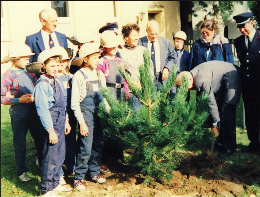Zempin – 1990 Kiefernpflanzung